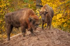 Wildpark Tambach - (c) Mario Kern