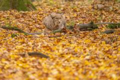 Wildpark Tambach - (c) Silke Kern