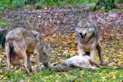 Wildpark Tambach - (c) Michael Grau