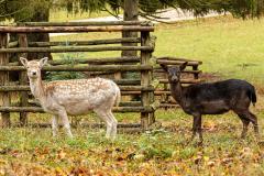 Wildpark Tambach - (c) Hartmut Klamm