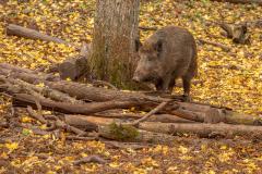 Wildpark Tambach - (c) Rainer Schaller